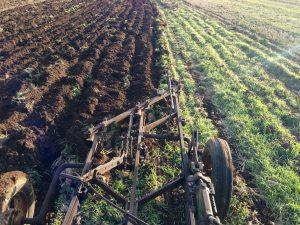 Plowed Furrow